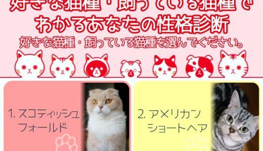 【すぐわかる!】好きな猫種・飼っている猫種でわかるあなたの性格