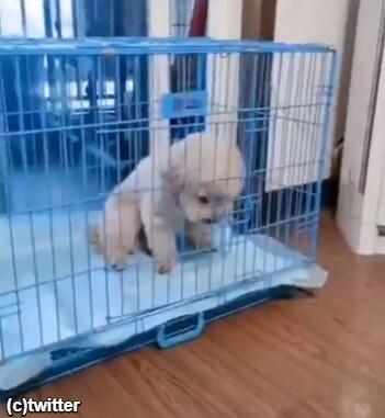 【衝撃動画】「もうダメ。暑すぎるー!」犬がとった驚きの行動とは?