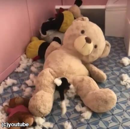 モゾモゾ動くクマのぬいぐるみの中には犬!?ホラー映像かと思ったら違った