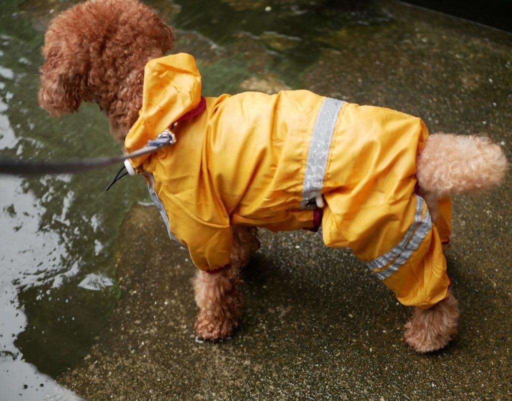 【知っトク情報】犬用折りたたみ式ケージのすすめ 災害時のわんちゃんの避難所生活をより快適に