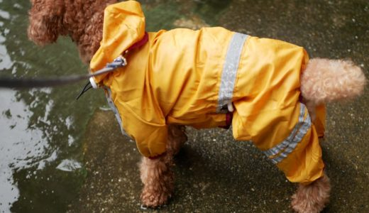 【知っトク情報】犬用折りたたみ式ケージのすすめ|災害時のわんちゃんの避難所生活をより快適に