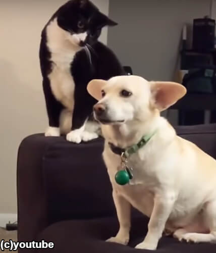 猫が犬の頭をたたいてみた!「どんな反応するのかにゃ?」その結果…