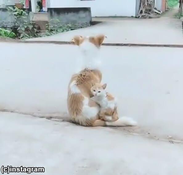 ペアルック模様の犬と猫を発見!仲良しすぎて一体化してしまう「おそろだね~」