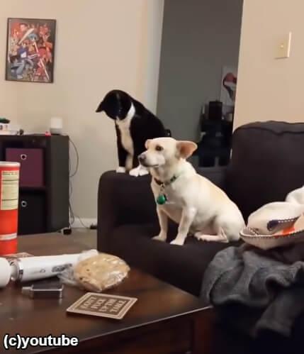大人しく座っている犬と猫