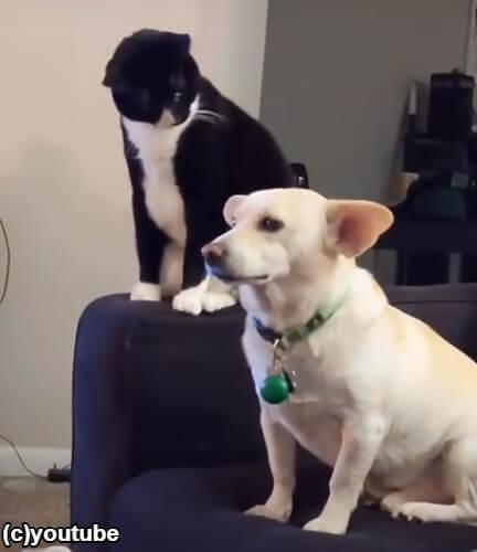 犬の後頭部を眺める猫