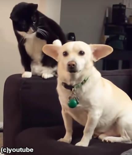 前足で犬を叩く猫