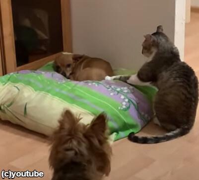 手を当て続ける猫