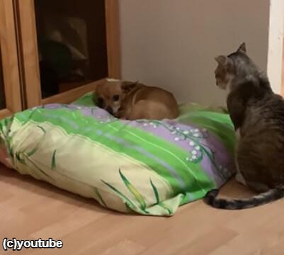 再び犬をじっと見つめる猫