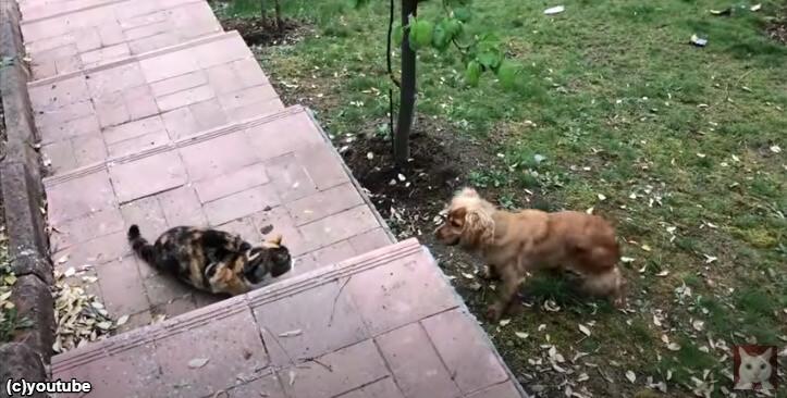 【強い…】隣の犬から庭を守る猫たち「絶対入れさせないニャンよー!」