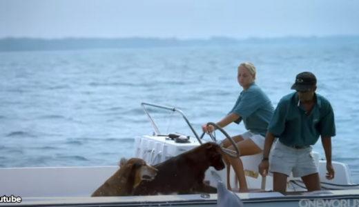 犬とイルカが海上でごあいさつ!「ようこそ、私たちの海へ」「やぁ、海の調査に来たワン」