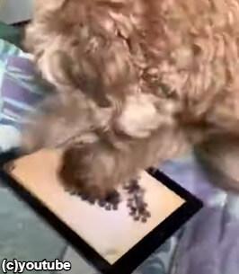 ものすごい速さで画面をたたく犬