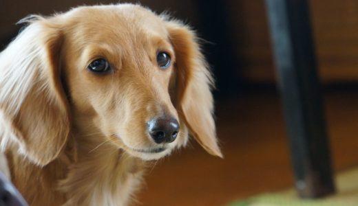 犬のヘルニア治療が変わるかも!?DFAT細胞で中枢神経を作る方法が見つかる