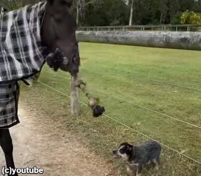 馬がロープを持ちあげる