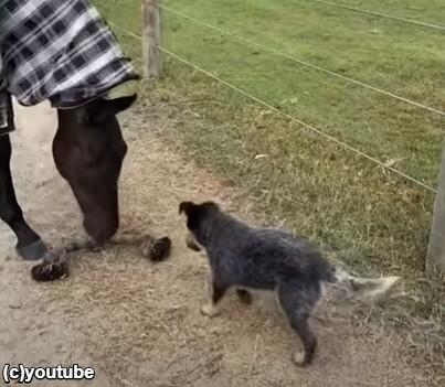 地面にロープを落としてあげる馬