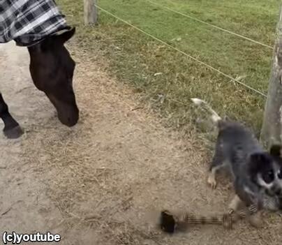 ロープを持ち去ってしまう犬