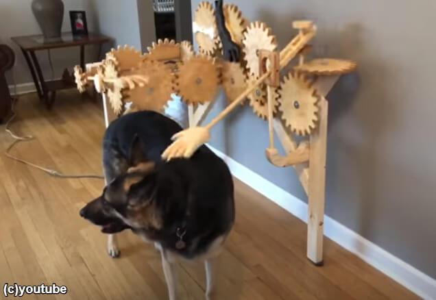 なでなでされる犬 width=