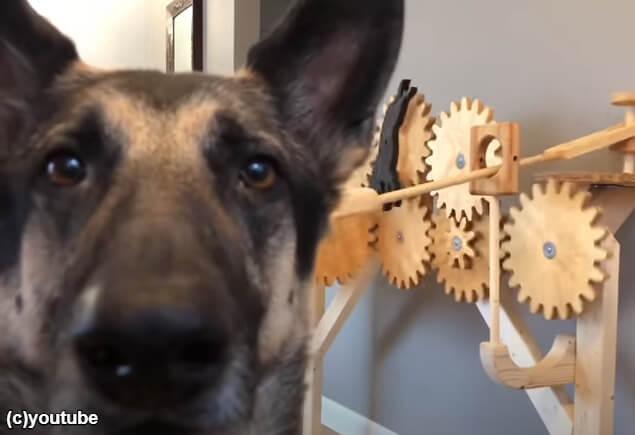 マシンと一緒に記念撮影する犬