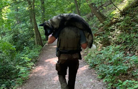 【朗報】ハイキング中に熱中症で倒れた犬、パークレンジャーの男性に担いで運ばれて何とか助かる!
