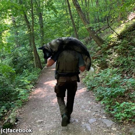 【朗報】熱中症で倒れていた犬、パークレンジャーの男性に担いで運ばれる!