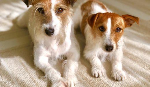 【衝撃的なニュース】「犬の年齢は人間の7倍説」は嘘!?アメリカの大学が発表