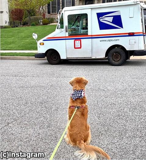 【ほっこりニュース】晴れの日も雨の日も、郵便配達員を待つレトリーバー