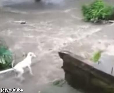 【大ピンチ】愛犬が川に流されてしまった!飼い主がとった行動とは…?