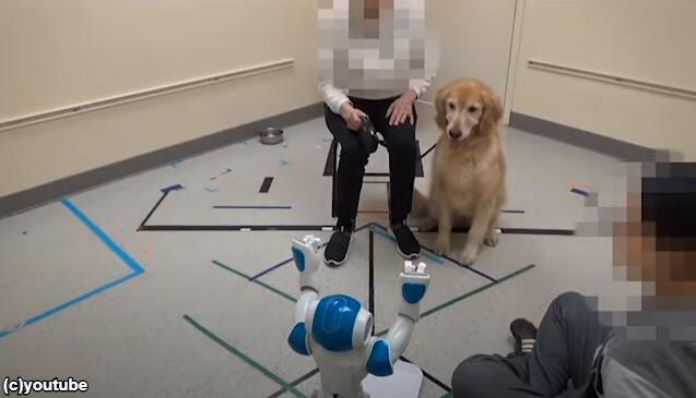 【衝撃的】犬はロボットの命令に従うのか?アメリカの研究結果が公開される