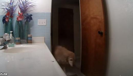 「花火の音がこわいワン!」大きな音が苦手な犬がとった行動とは?