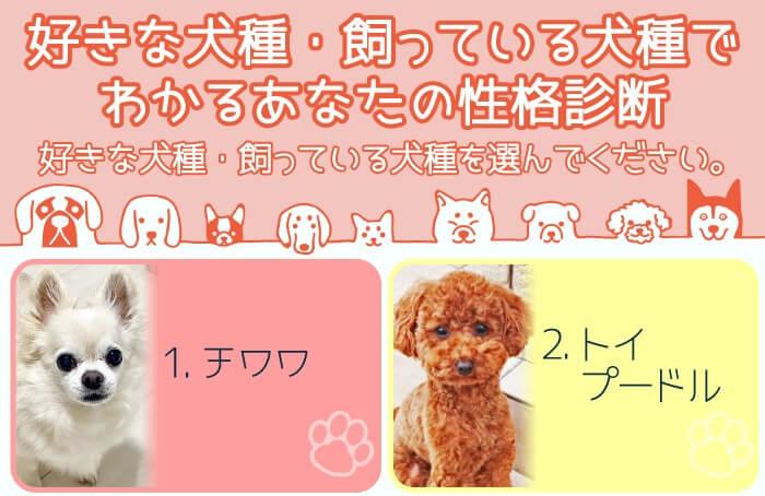 【ズバッと当たる!?】好きな犬種・飼っている犬種でわかるあなたの性格