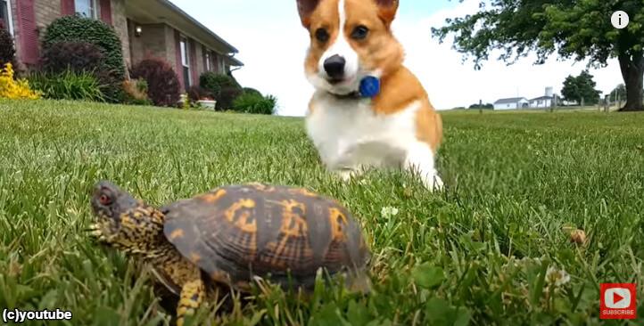 ピクッと動いた石のようなものを見て驚く犬