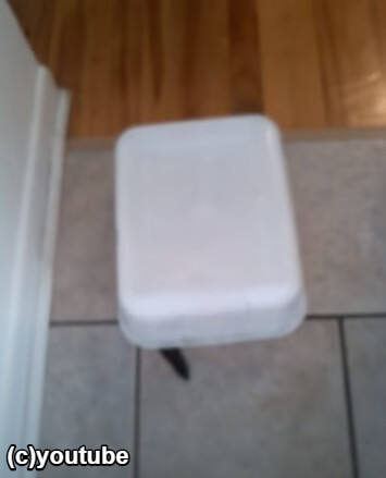 箱からしっぽだけ出すフェレット