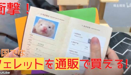 【気になる情報】フェレットがついに家へやってきた!海外では通販で動物が買える!?