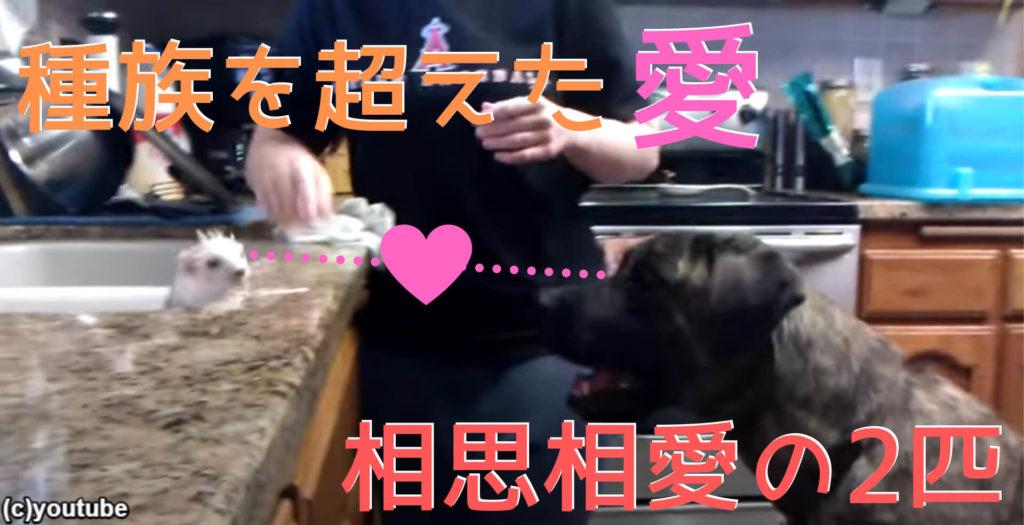 フェレットと犬は仲がいい【その証拠写真がコチラ…】ある時はキッチンで、ある時はお庭でじゃれ合う2匹