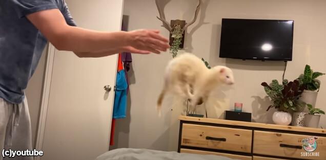 もう一回ジャンプを要求する飼い主