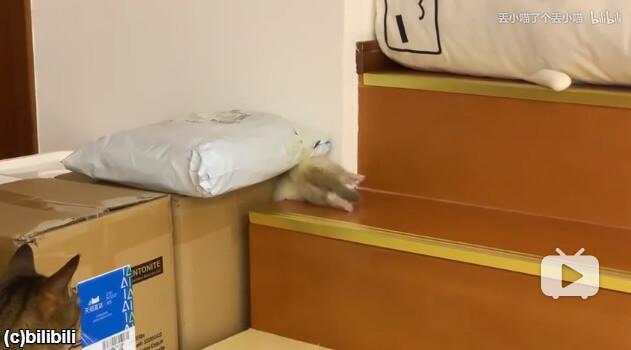 階段の隙間に潜るフェレット
