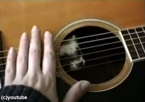 ギターに入ってしまったフェレット