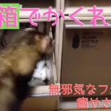 フェレットがゴミ箱で「かくれんぼ」にハマる!「みーつけた!はい、次鬼ね。」