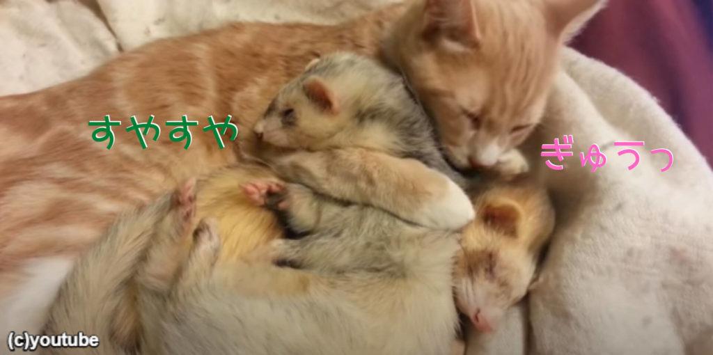 フェレットと猫が仲良く重なって寝る「このおうちに来てよかったニャ」幸せそうな寝顔を公開