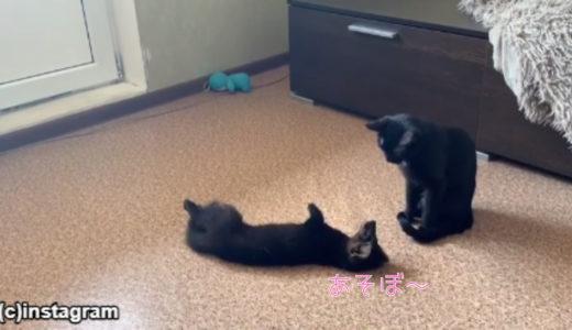 「毛皮工場出身のフェレットVSペットの猫」一つ屋根の下で仲良くやっていけるのか?