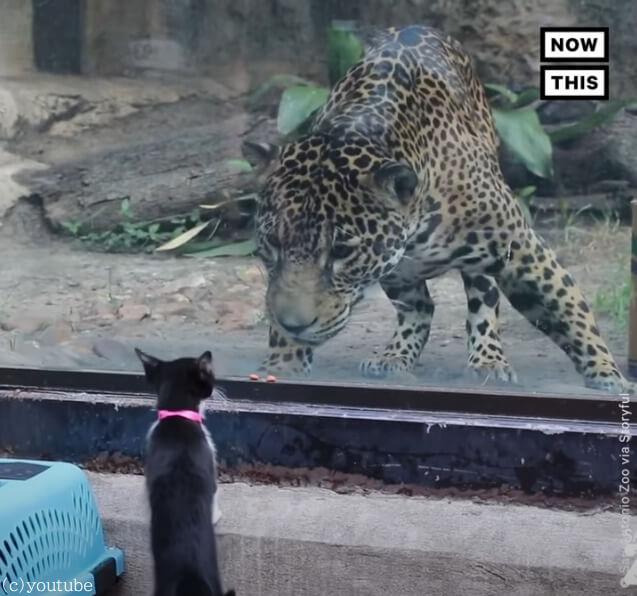 【お互いに興味津々!】動物園の動物たちとペットが対面するとほっこりタイムが生まれる