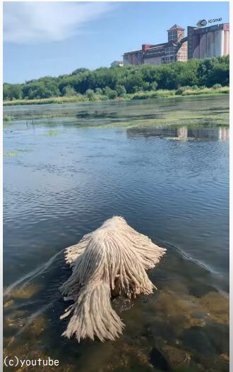 モップが泳いでる?不思議な動きで漂うモップの正体に仰天した人続出