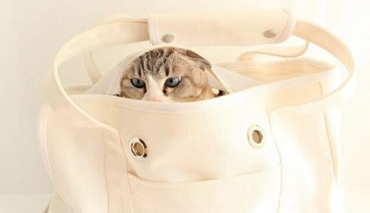 【防災便利グッズ】台風シーズン前に備えたい猫ちゃんのための防災グッズが発売
