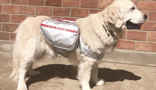 【防災対策】自分で持ち運べる愛犬用の避難用バッグ2種類が販売開始に