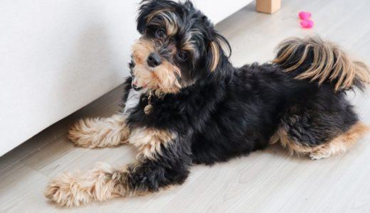 【犬の熱中症対策】犬を守る夏の季節のエアコンの正しい使用方法とは?