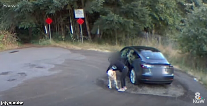 監視カメラは見ていた!公園にゴールデンレトリバーを捨てる女(アメリカ)