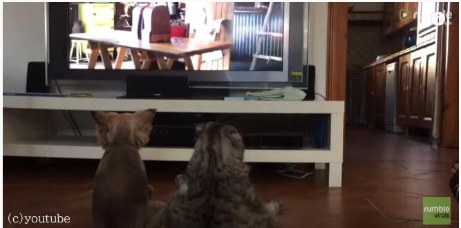 二匹揃って何してるの?犬と猫がテレビの前に仲良く座って映画鑑賞