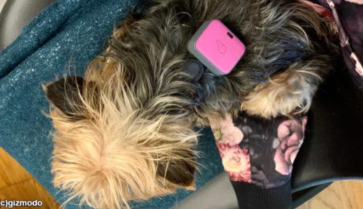 愛犬にフィットネストラッカーをつけた結果がちょっと残念!「散歩嫌いを治したい!」けれど……