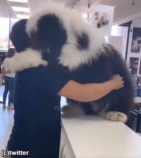 飼い主への愛情が強すぎる犬がカワイイ!大きなモフモフの「抱っこして」攻撃