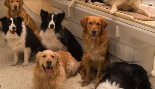 「犬は人間をどう思っているか」MRIで脳スキャン(米エモリー大学研究)その結果が幸せすぎ…