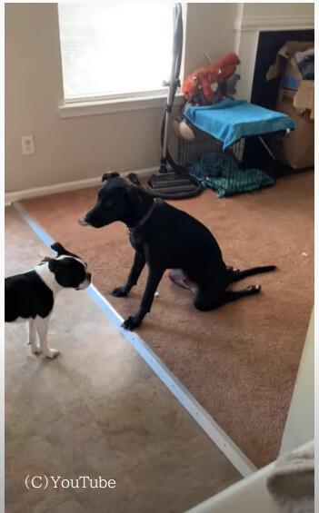 【反省?土下座?】目の前の犬に謝ってるみたい!まるで土下座しているように見える反省犬